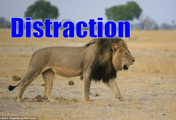 DON'T FALL FOR IT:  Media peddles lion distractions while Americans face real threats